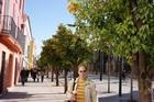 Апельсиновые деревья в Севилье