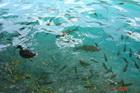 Обитатели озер